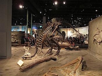 royal_tyrrell_museum_5995.JPG