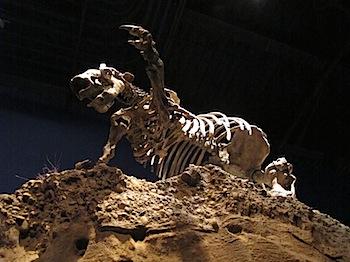 royal_tyrrell_museum_6022.JPG