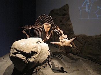 royal_tyrrell_museum_6024.JPG