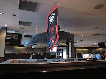 shark_club_6392.JPG
