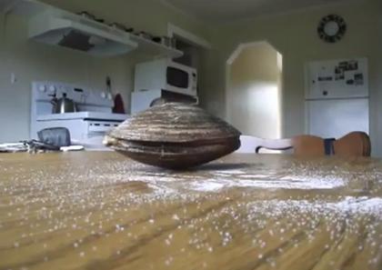 【動画】テーブルに置かれた貝がまかれた塩をビローンと舐める!!
