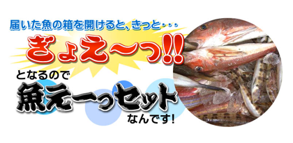 「魚えーっセット」底引き網漁で獲れた小魚がてんこ盛り!?1,990円