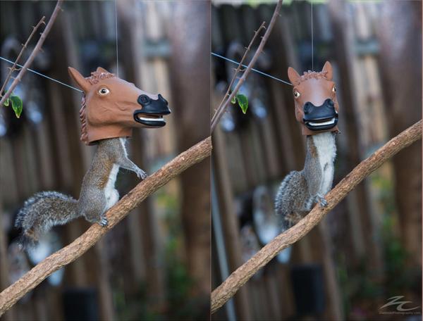 これは面白かわいい!リスが馬のかぶり物をしている!