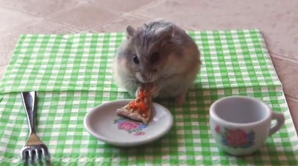【動画あり】ピザを頬張るハムスターかわいすぎ!