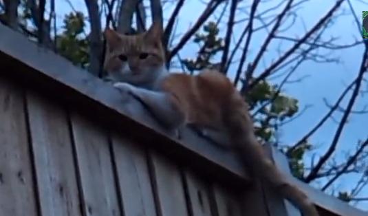 【動画あり】え、いま喋ったよね?猫が「ハロー」って言ったよね!?