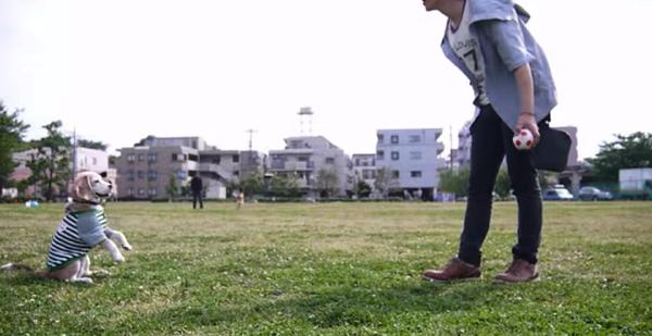 【動画】かわいいビーグル犬プリンが上手にボールをキャッチ‥‥え、その方法で!?