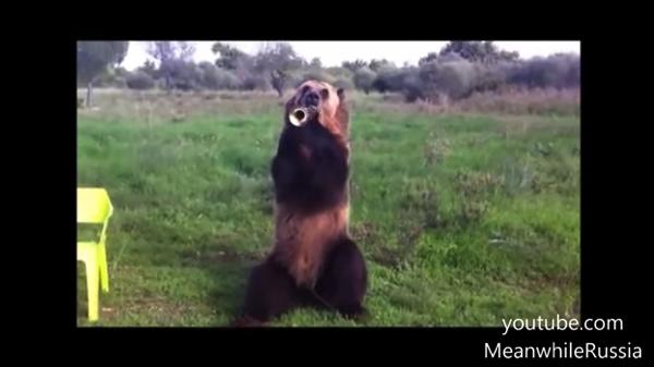 【動画あり】絵本に出てきそう!ラッパを吹く芸達者なクマ