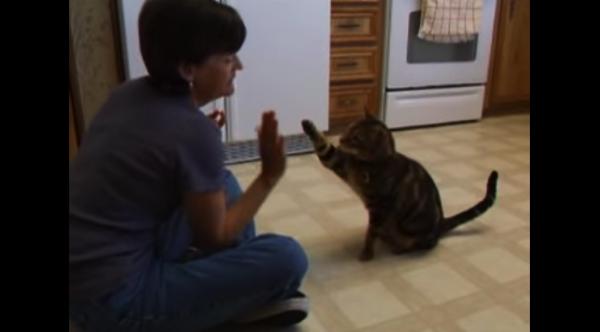 【動画あり】お座り・ハイタッチ・握手・寝転がる!犬みたいに芸達者な猫にキャッと驚く!
