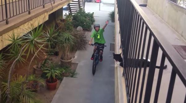 【動画あり】きゃわわ!自転車で通りすぎる少年とハイタッチする猫
