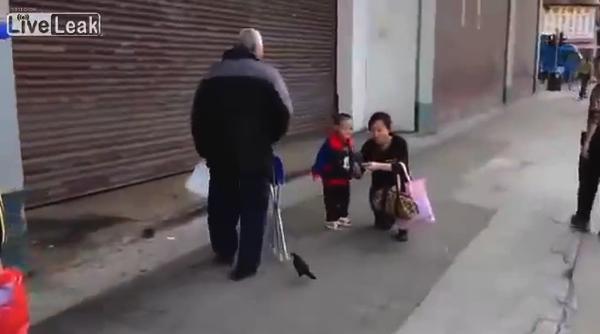 【動画あり】これはほっこり!鳥と散歩するおじいさん(注:鳥は飛んでない)