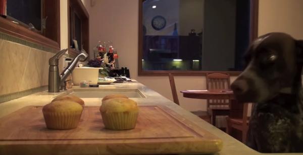【動画あり】こらー!カップケーキを盗み食いしたのは誰だー!→ 隠しカメラで犯人が明らかに