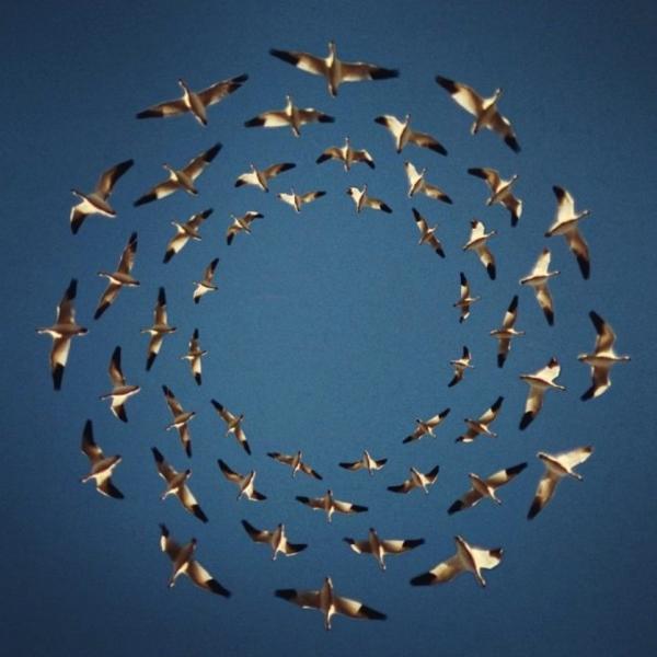幾何学的なパターンで飛ぶ鳥たちの集合写真
