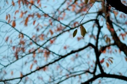 東京で「木枯らし1号」が吹く →「凩」←読める?