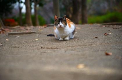 お供えを持って飼い主の墓参りをするネコがイタリアで話題に