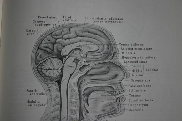 【ディスクレシア】読字障害で大脳活動の異常が発見される