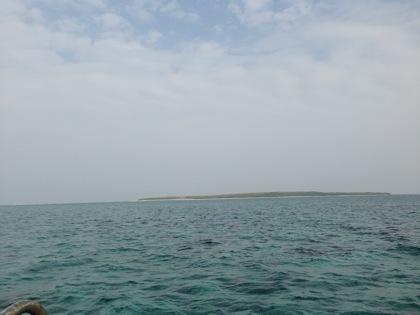 「嘉弥真島(カヤマ島)」小浜島から船で片道10分!数百羽の野うさぎが暮らす無人島