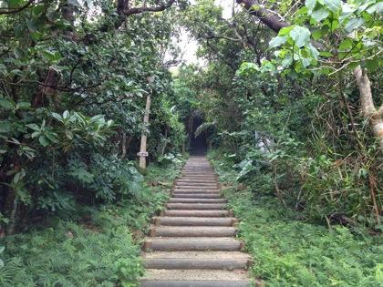 Kohamajima 5940
