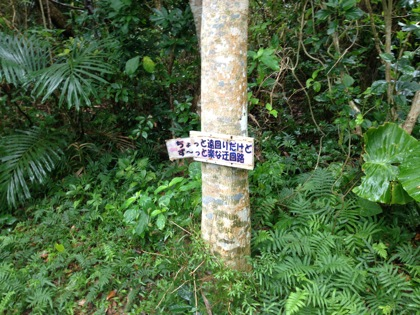 Kohamajima 5941