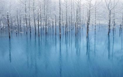 北海道美瑛の写真家の作品「Blue Pond」OS X Mountain Lionの壁紙に選出される!