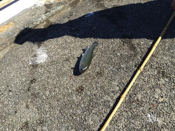 Toshimaen fishing 5707