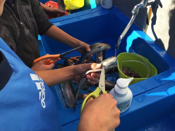 Toshimaen fishing 5717