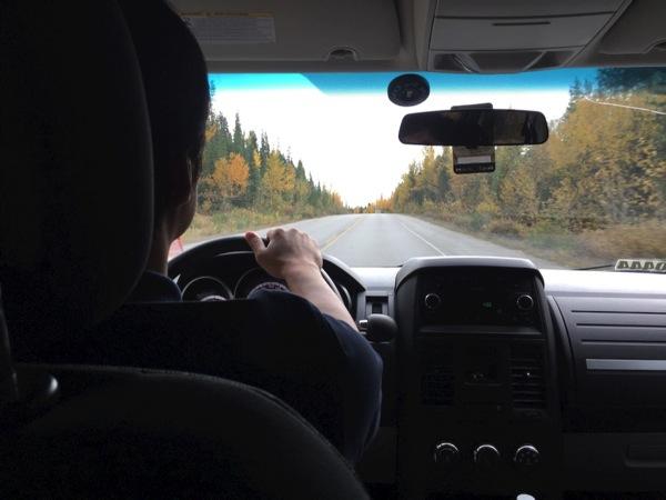 「アイスフィールド・パークウェイ」秋はポプラが紅葉で黄色く色づく #アイスフィールド・パークウェイ #アルバータ秋旅 #カナダ