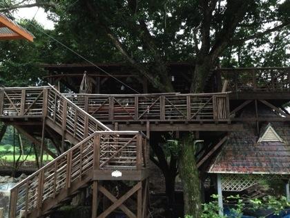 Wildforest 2352