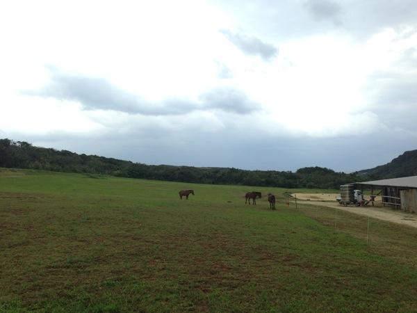 Yonaguni trip 5661
