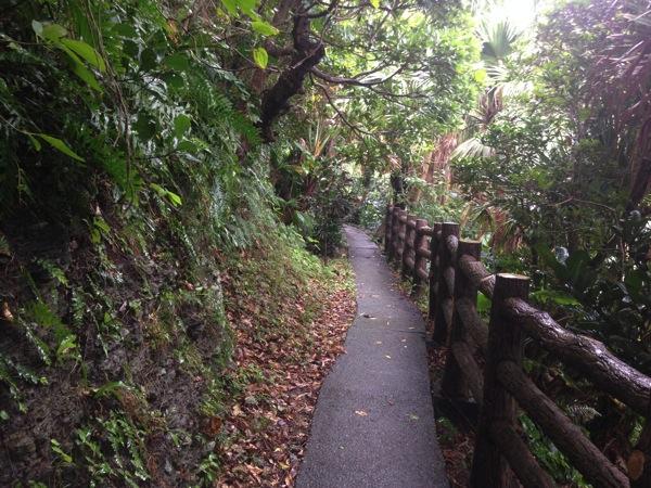 Yonaguni trip 5768