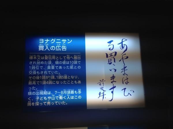 Yonaguni trip 5797