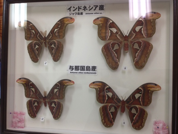 Yonaguni trip 5834