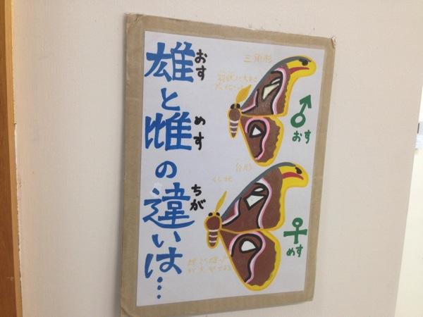 Yonaguni trip 5839