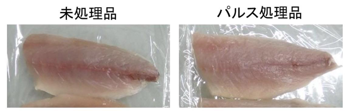 Puls fish 5